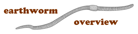Earthworm overview.png