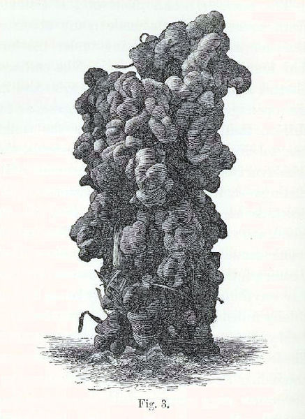 File:Tower-like cast, reported to belong to ''Perichaeta'' sp.jpg